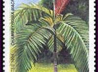 Yeni Kaledonya