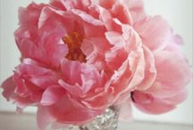 In Bloom / by Maria Fernanda Jorquera de Iglesias