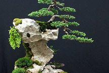 Life (Bonsai Art Idea)