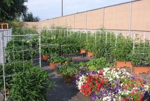 EarthBox® Company Garden / Take a Look at What's Growing at EarthBox® Headquarters in Lancaster, PA