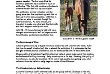 Horse Educational Resources / Horse educational resources to download at TeachersPayTeachers by Christine Meunier. Free and purchasable resources.