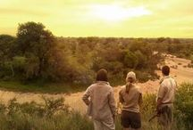 Safari Dreams / Thinking of a safari? Here are some inspirational pictures to help turn your dream into reality.