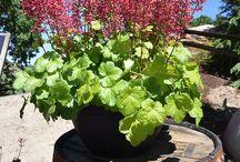 Dümmen Orange Plant Of The Month