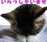cats / so cute cats