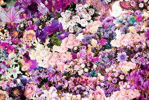 Kukkia, ihania kukkia