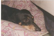 My dog Otello / He died in 2008 but he is always in my heart! <3