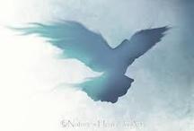 bird / by Adriana Ruiz Velasco