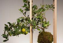 Planters/Plant Accessories