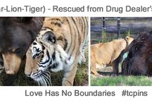 Love Knows No Boundaries / The world's best animal (inter-species) friendships ... and anything else my good friends on Pinterest think might belong.  Cheers!