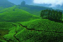 Enchanting Munnar / Just a few pictures to give you an idea about what's in stock for you when you are spending your vacation with us at Tea County Munnar...