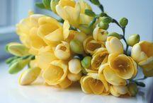 Buttercup Yellow