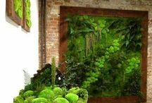 moss walls