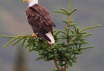 Nature|The Eagles / About Eagles in the world