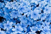 Patroon dels blauw
