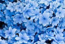 Kék........