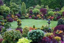 garden with colour