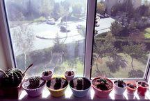 My Cactus Garden