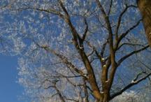 Seasons / Pics of seasons