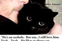 Cat porn