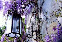 Life Outdoors / by Lara Brisson