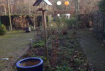 Tuin door het jaar heen / Mijn voornemen: (bijna) iedere dag een foto van de tuin nemen om de verandering van de seizoenen goed te kunnen zien.