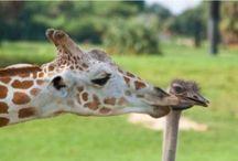 roztomilá zvířata