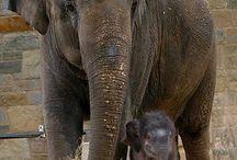 Elephants / by Kris Hawkins