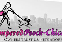 Call Pampered Pooch Chicago When You Need Dog Walkers in Chicago / Call PamperedPooch-Chicago when you need dog walker in Chicago! PamperedPooch-Chicago is a small and private dog walking service that are reliable and prioritize your pet's specialized needs. PamperedPooch-Chicago provides the dog walkers Chicago residents look for when looking after their pet. Visit http://www.pamperedpooch-chicago.com/ for more information.