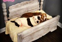 Doggie beds!