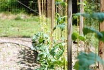 Veggie Garden / by Annie Johnson
