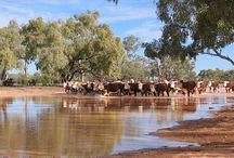 Outback stations australia
