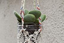 domy dla roślin 1 / teraria, doniczki, miseczki, butelki – małe pojemnkiki do hodowli roślin
