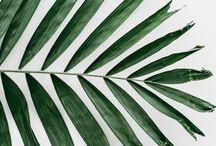 nature | plants