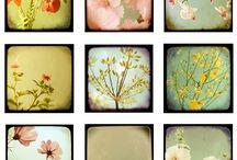 Flower press / by Angela Douglas