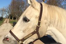 Alphabet Soup / This is my horses sire. He is a famous retired race horse.