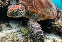 Teknősök
