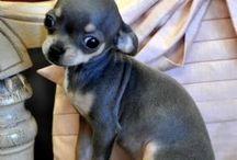 Doggy woggys xxx