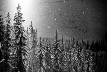 Environment / Ultra natural nature. / by Snowboard Magazine