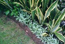 Nusa Dua Garden and Landscape / Garden and Landscape
