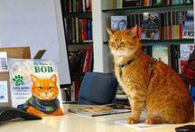 Könyv -zárt- A Street Cat Named Bob /  A Street Cat Named Bob by James Bowen