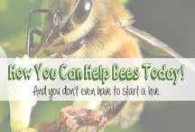 Bees need our help