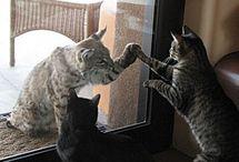 Here Kitty Kitty / by Diane Walker