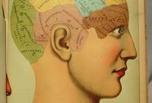 Brain Power! / From The Book of Health (1898) by Henry M. Lyman et al., an intricate and richly colored diagram of the human skull and brain - made up of movable flaps which allowed readers to learn about the skull and brain layer by layer.