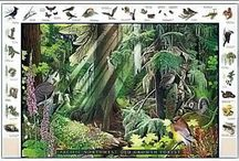 Botanical & Natural World Factoids / This board brings depth and discovery to the beautiful botanical prints we love so much.  Here you will find information, articles, and interesting factoids about trees, mushrooms, animals, ecosystems and botanicals featured in our vintage prints and scientific illustrations / by Charting Nature