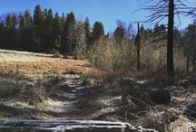 Palomar Mountain State Park / by CA State Parks