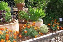 Herb Garden / by Tara Verburg