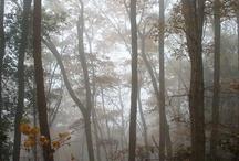 Trees-木々-