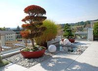 Terrassengestaltung  / Wir sind spezialisiert auf die Terrassengestaltung, hier einige Ausführungsbeispiele