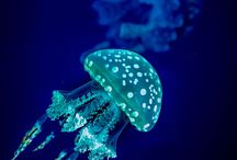 Bioluminiscence & others