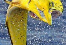 byzondere vissen